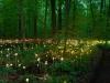 nachtaktives-blumenmeer-bruce-monro-field-of-light-02