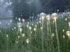 nachtaktives-blumenmeer-bruce-monro-field-of-light-07