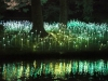 nachtaktives-blumenmeer-bruce-monro-field-of-light-12