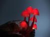 pilz-licht-great-mushrooming_yukio-takano_6