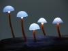 pilz-licht-great-mushrooming_yukio-takano_7
