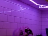 philips-hue-halloween-lightstrip-plus-skeleton