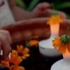 Sommerlich(t): Leuchtend orange – Calendula Fields Forever!
