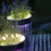Sommerlich(t): Lässig lila – Lavendel mit Licht