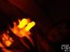 led-light_aqualight_1769