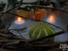 philips_tealight_led-teelichter_1423