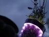 Serie SommerLich(t): Lavendel in LED-Vase